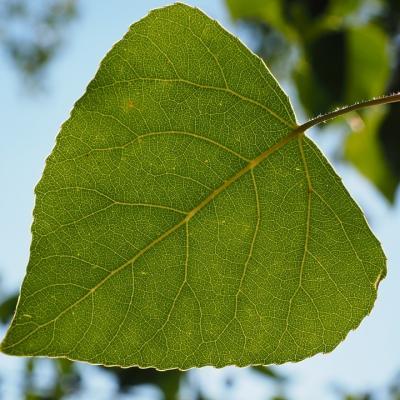 Leaf 671661 960 720